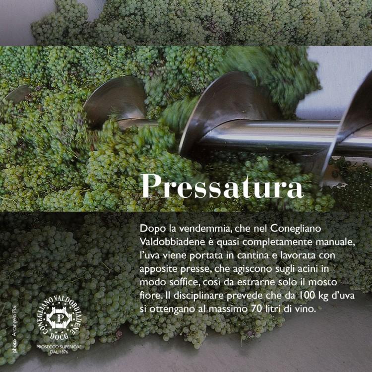 PROSECCO.IT — CONEGLIANO VALDOBBIADENE DOCG - 04 pressatura