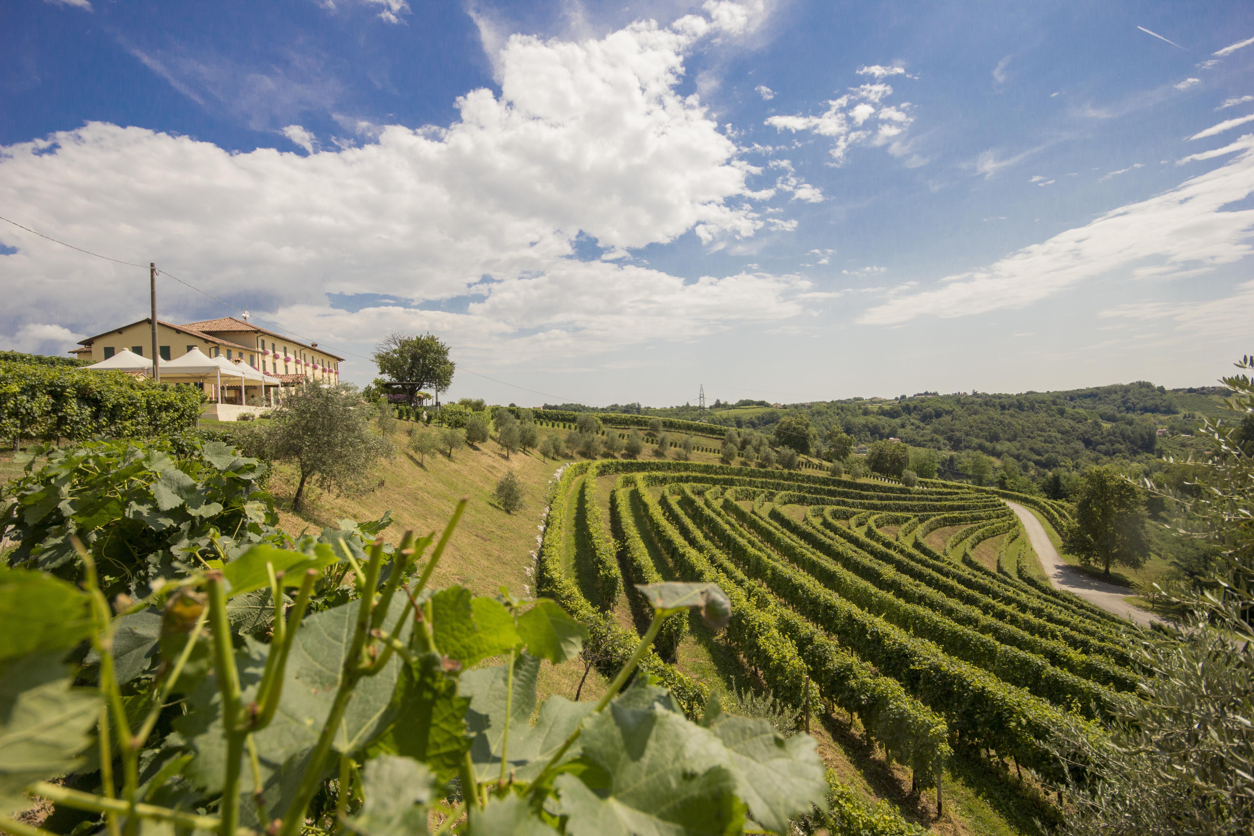 Astoria Vini Prosecco.it — Conegliano Valdobbiadene DOCG